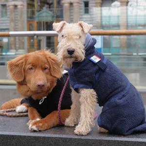 Nova Scotia Duck Tolling Retriever en Lakeland Terrier in onze hondenbadjas Chic en de Dutch